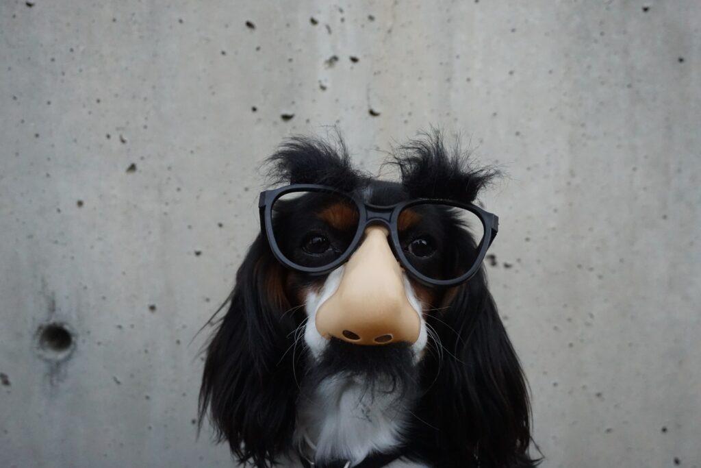 Wolf Global_TikTok for Business_Silly Dog